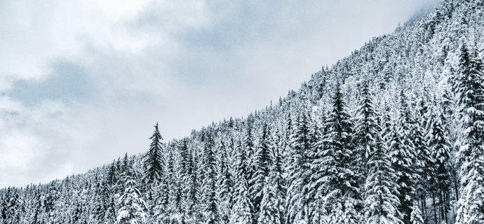 4k-ultra-hd-background-forest-trees-snow-snowy-winter-gloomy